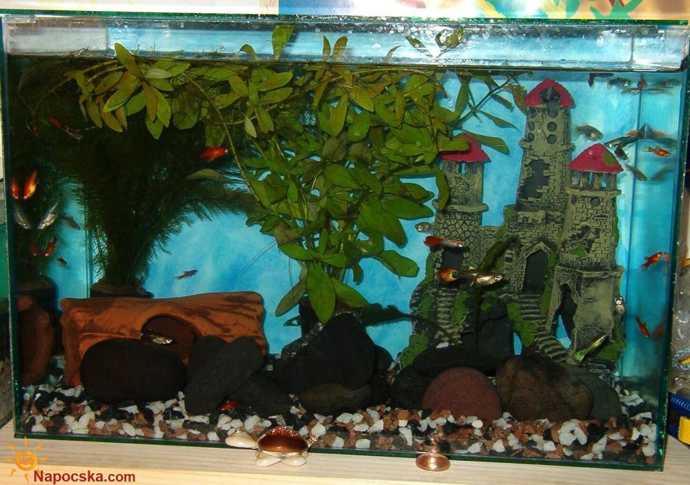 2005 novemberi kép az akváriumomról