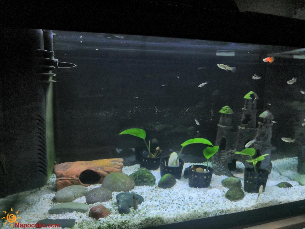 Ferplast halas akváriumom