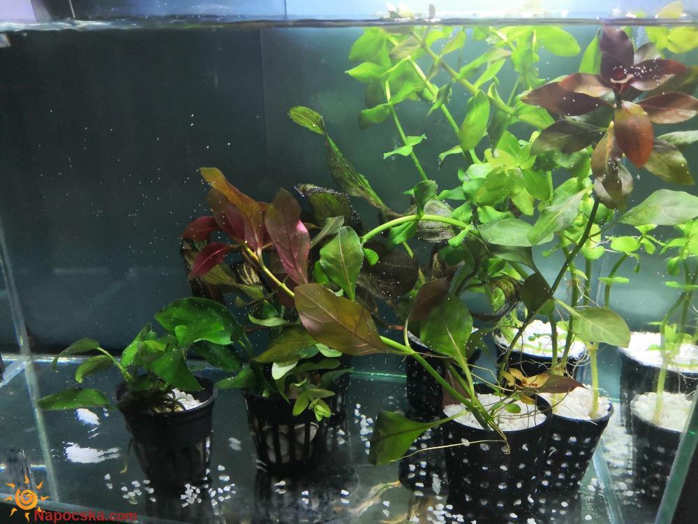 Karantén akvárium