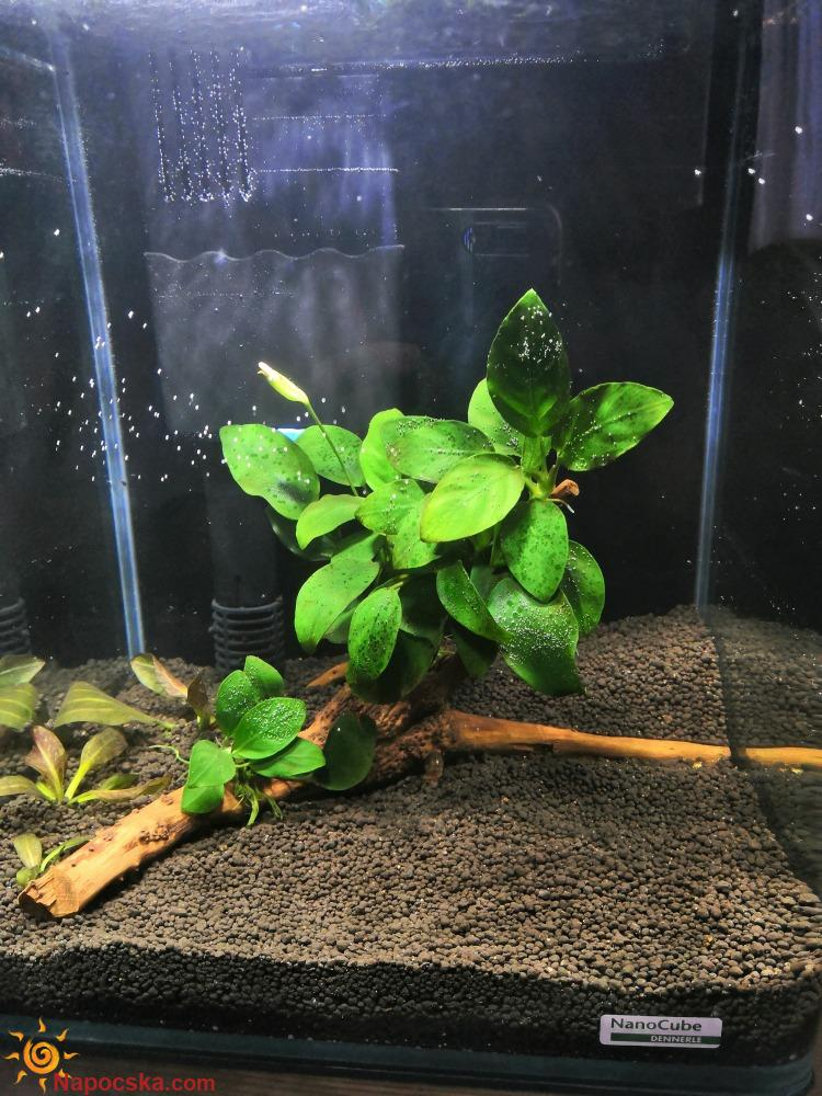 20 l nano akvárium